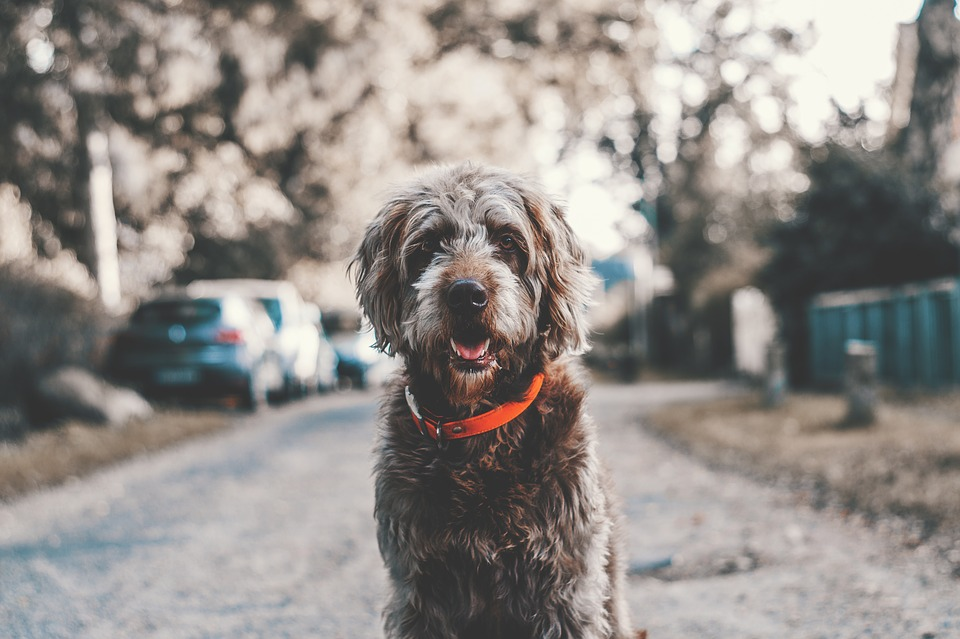 ever considered adopting a pet