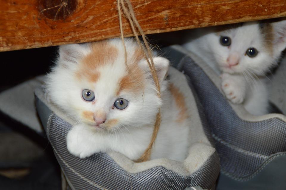 basic kitten care