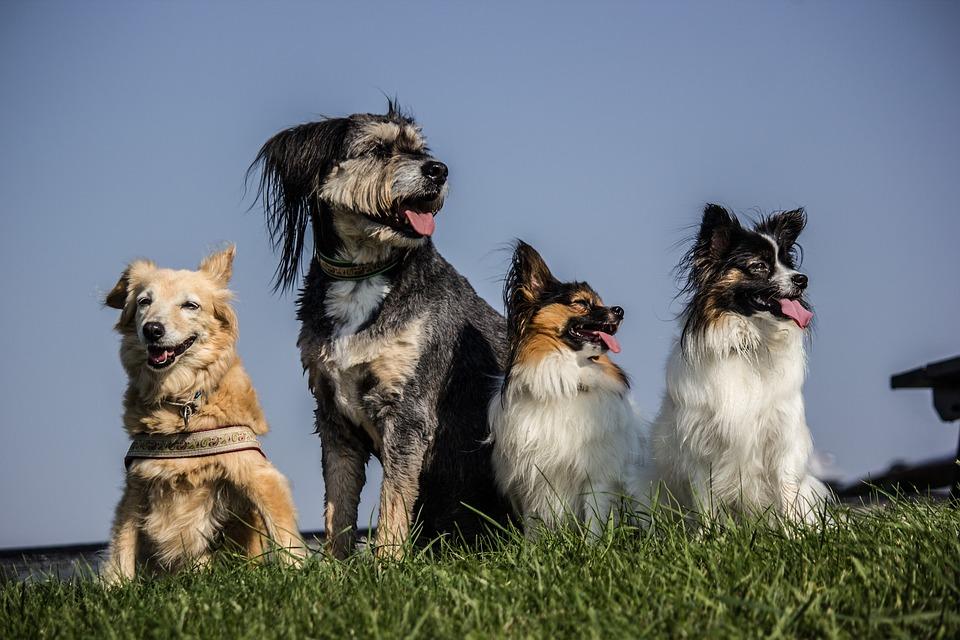 general dog health problems